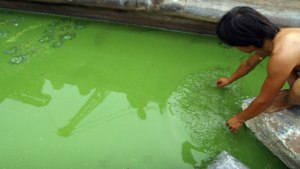 China's Fisheries Polluted  With Dangerous Chemicals